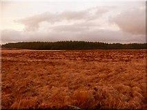 NX2757 : Knock Moss by Andy Farrington