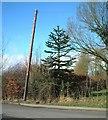 SP0974 : Rumbush Lane by araucaria araucana
