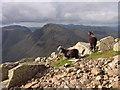 NY2207 : Sheep near Ill Crag by Sally