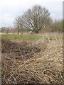 TQ4266 : The southern end of Bromley Public Golf Course by Mike Quinn