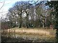 TQ4266 : Pond south of Bishop Justus School by Mike Quinn