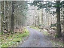 SH7519 : Forest Track by liz dawson