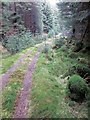 NM8910 : Forest track by Patrick Mackie