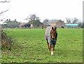 TG5002 : Pasture by Wheatcroft Farm, Bradwell by Evelyn Simak