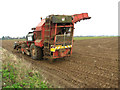 TG5002 : Sugar beet harvester in field south of Bradwell by Evelyn Simak