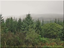NX5362 : The forest in the rain by Ann Cook