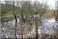 SD2989 : Flooded Shoreline, Coniston Water by Mick Garratt