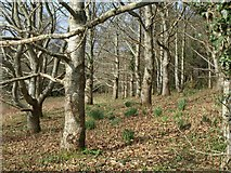 SX7962 : Woodland, Dartington by Derek Harper