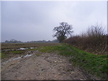 TM3864 : Footpath to Curlew Green by Adrian Cable