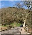 SX7961 : Foot of  Dartington Hill Plantation by Derek Harper
