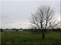 TQ4277 : Solitary tree on Woolwich Common by Stephen Craven
