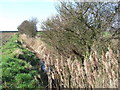 TF6116 : Ditch off Low Road south of King's Lynn by Richard Humphrey