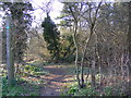 TM2851 : Footpath off the B1438 Yarmouth Road by Geographer