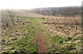 SJ8854 : Across the meadow by Jonathan Kington
