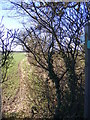TM4171 : Footpath to South Manor Lane by Adrian Cable