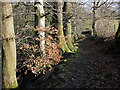 SD6188 : The path above Hall Beck near Killington by Karl and Ali