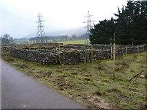 NN2014 : Sheepfolds and forest near Auchreoch by Richard Law