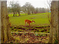 SJ4070 : Sitatunga at Chester Zoo by Steven Haslington