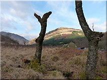 NN2316 : Wild campsite in Glen Fyne by Richard Law