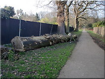 TQ3095 : Fallen Tree, Footpath to Oakwood Park, London N14 by Christine Matthews