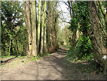TG2105 : Path through Danby Wood nature reserve by Evelyn Simak