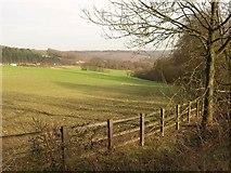 TQ2652 : Field on Reigate Hill by Derek Harper