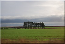 NU0937 : Clump of trees near Smeafield by N Chadwick