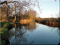 TG2105 : The River Yare at Harford, looking east by Adrian S Pye