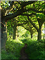 SP4802 : Bridleway, Wootton by Andrew Smith
