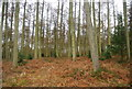 SO4973 : Conifers, Mortimer Forest by N Chadwick