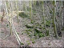 SE1839 : Disused quarry, Dawson Wood, Idle by Humphrey Bolton