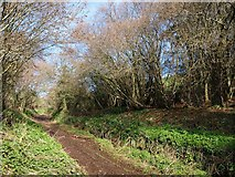 ST0104 : Cranishaies Lane by Derek Harper