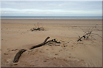 NT6578 : Driftwood at Belhaven Bay by Walter Baxter