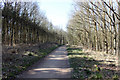 TL1367 : Footpath and cycleroute through woodland by Simon Judd