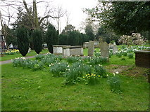 TQ2475 : All Saints, Fulham: spring in the churchyard (e) by Basher Eyre