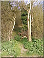 TM3760 : Footpath to the A1094 Farnham Road by Adrian Cable