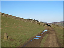 NY9449 : Track through pastures above Beldon Burn by Mike Quinn