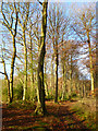 SU6983 : Bear Wood, Highmoor by Andrew Smith