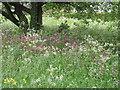 SP9107 : Buckland Common, Village Green by Linda Wordsworth