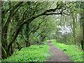 TM2090 : Footpath through Crow Green by Evelyn Simak