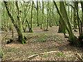 TM1880 : Middle Wood, Upper Billingford by Evelyn Simak