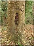 SX9065 : Food wrappers in tree, Chapel Hill Pleasure Grounds by Derek Harper