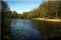 TQ2272 : Queen's Mere, Wimbledon Common by Jim Osley