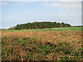 TG0741 : Warren Plantation as seen from the footpath to Lawn Farm by Evelyn Simak