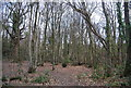 TQ7811 : Coppicing, Church Wood by N Chadwick