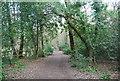 TQ7811 : Footpath , Church Wood by N Chadwick