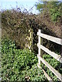 TM3054 : Footpath opening to the A12 Wickham Market Bypass by Adrian Cable
