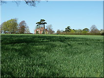 TQ0524 : Wheat field near Harsfold Manor by Dave Spicer