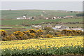SW6631 : Daffodils and view to Wendron by Elizabeth Scott