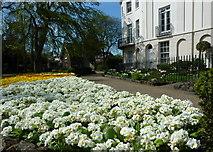 TR1457 : Flower bed in Dane John Gardens by pam fray